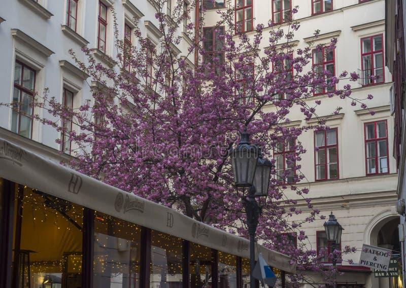 República Checa, Praga, o 8 de abril de 2019: Passagem entre a rua de Jungmanova e de Vodinckova em Praga velha com restaurante fotografia de stock