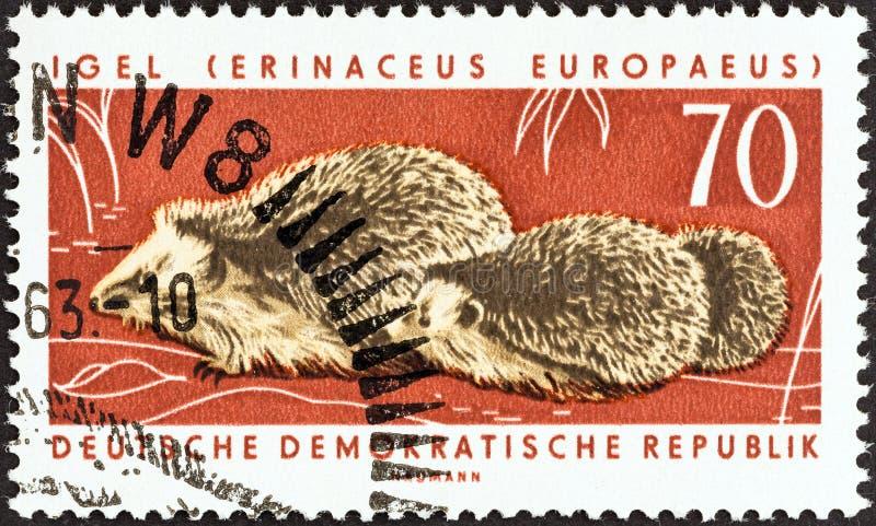 REPÚBLICA DEMOCRÁTICA ALEMANA - CIRCA 1963: Un sello impreso en Alemania muestra erizos de Europa Occidental, alrededor de 1963 imágenes de archivo libres de regalías