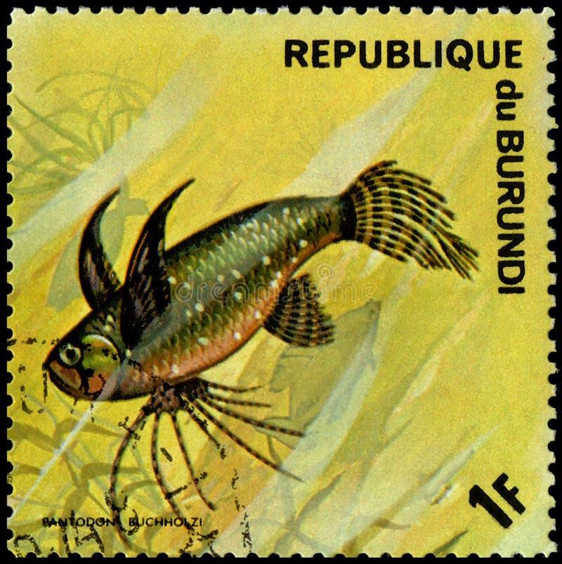 REPÚBLICA DO BURUNDI - CERCA DE 1974: o selo postal, impresso em Burundi, mostra a um peixe o buchholzi africano de Pantodon dos  imagens de stock