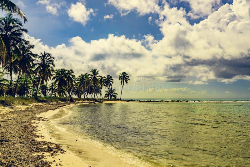República Dominicana de la costa del Caribe del cielo del océano de la palma foto de archivo