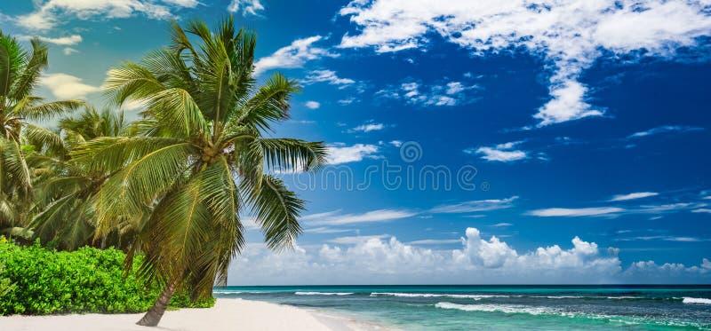 República Dominicana del mar de la palmera de la playa del centro turístico del paraíso fotos de archivo