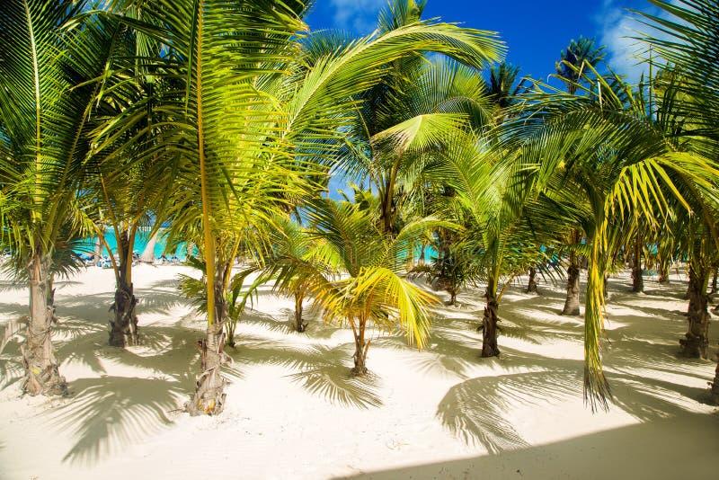 Rep?blica Dominicana, cana de Punta, isla de Saona - Mano Juan Beach fotos de archivo