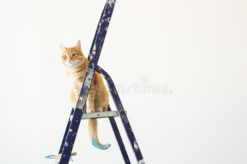 Repair, painting the walls, the cat sits on the stepladder. Funny picture with copy space royalty free stock images