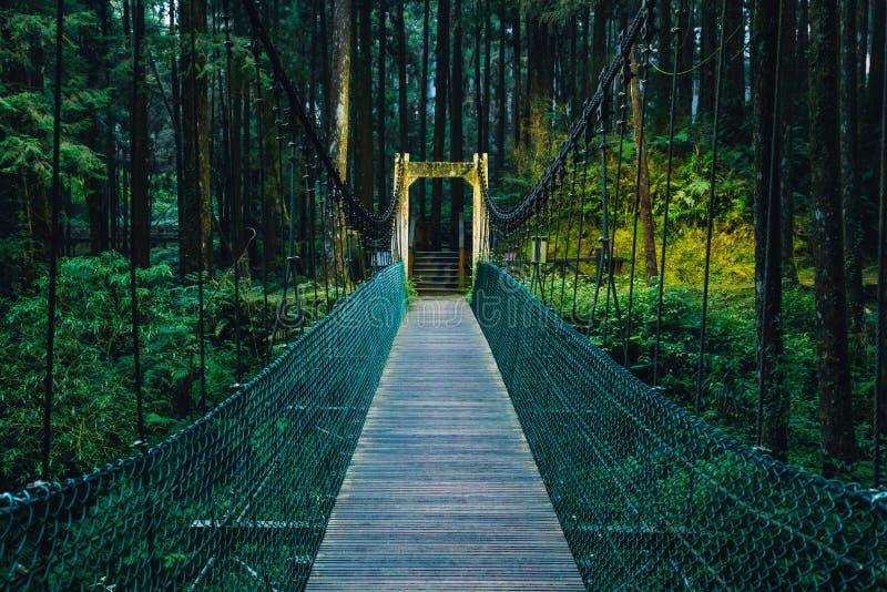 Repbro till skogen i den Alishan medborgaren Forest Recreation Area i Chiayi County, Alishan församling, Taiwan fotografering för bildbyråer