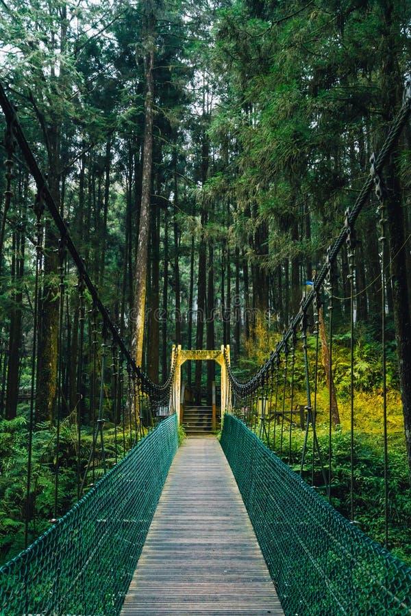 Repbro till skogen i den Alishan medborgaren Forest Recreation Area i Chiayi County, Alishan församling, Taiwan arkivbild