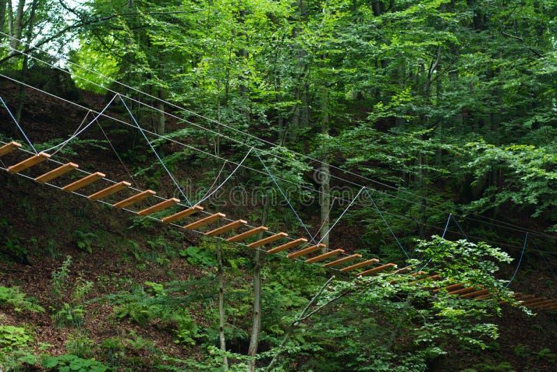 Repbron band högt i träden i skogen arkivbild