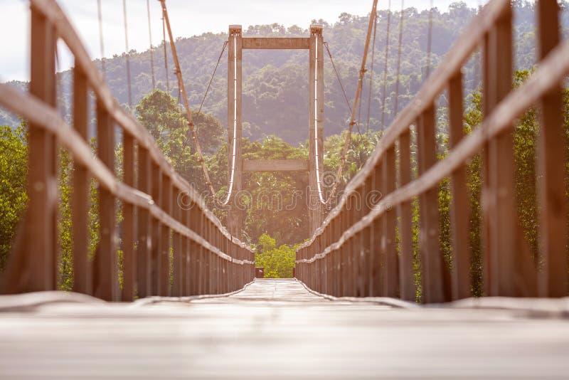 Repbron för går till och med mangroveskog royaltyfri bild