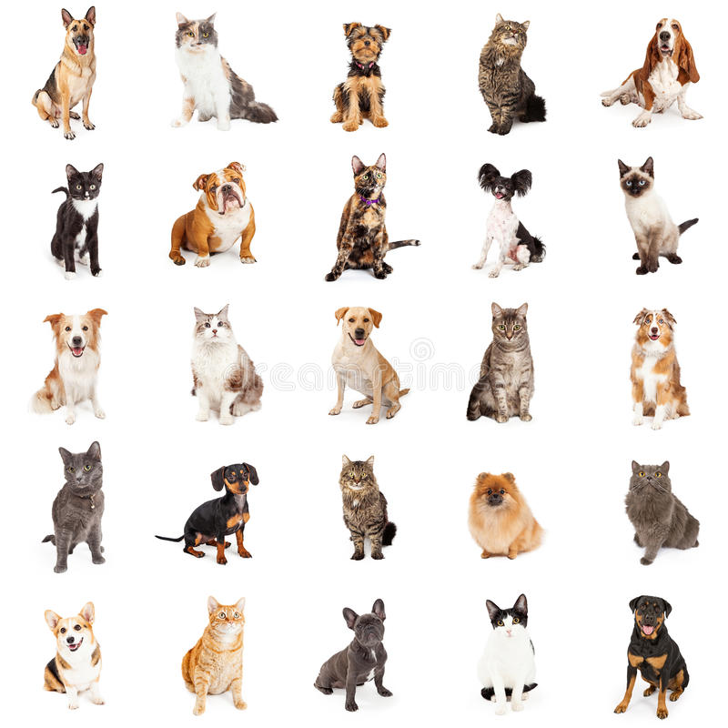 Repeating Pattern of Cats and Dogs. Large group of cats and dogs on square white background that can be made into repeating pattern royalty free stock image