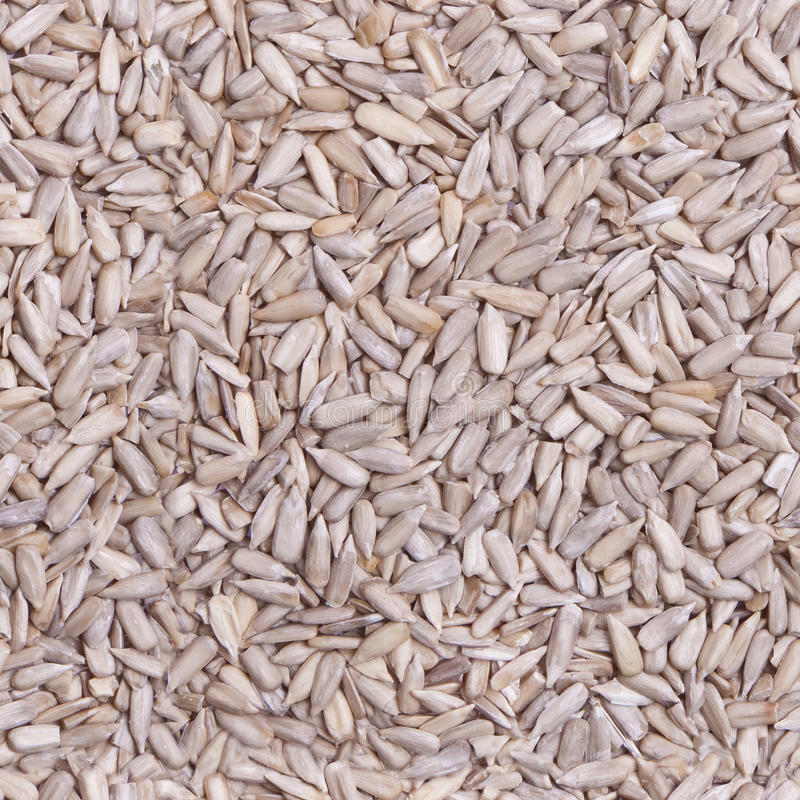 Repeating Sunflower Seeds Wallpaper stock image