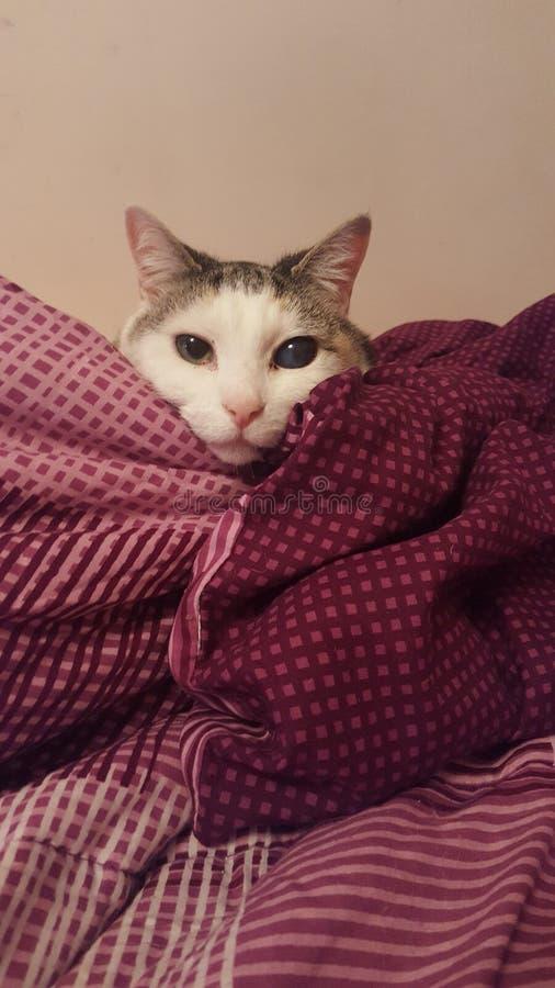 Repicando o gato foto de stock royalty free