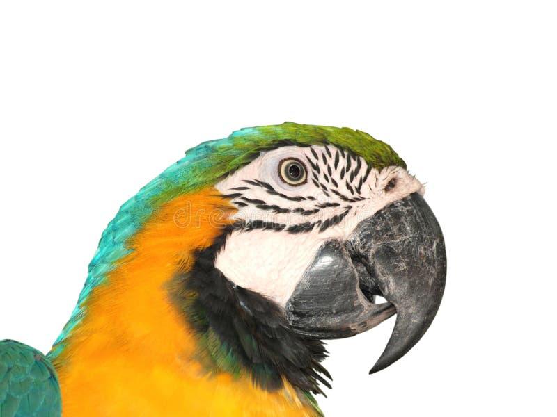 Repita mecánicamente el pájaro fotos de archivo