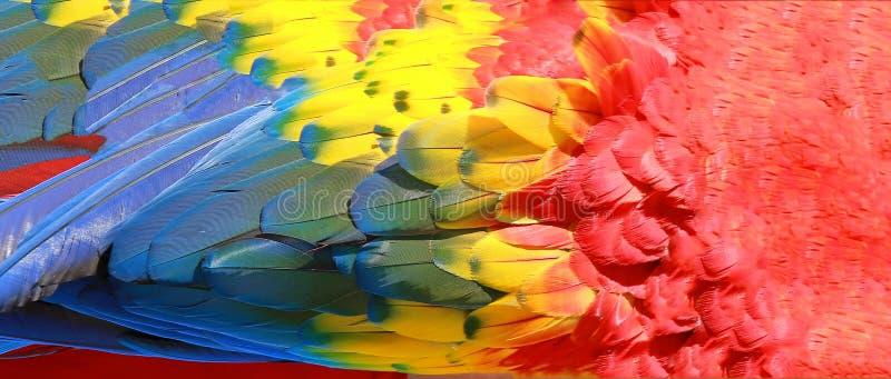 Repita mecánicamente la textura de las plumas, del rojo, amarilla y azul imagen de archivo libre de regalías