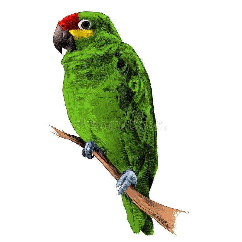 Repita mecanicamente as Amazonas que itting em um vetor do esboço do ramo de árvore ilustração do vetor
