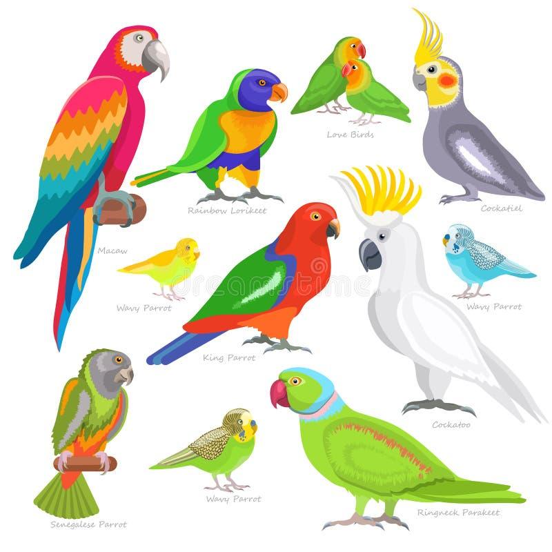 Repita mecanicamente o caráter do parrotry do vetor e a arara exótica tropical do pássaro ou dos desenhos animados no grupo da il ilustração do vetor