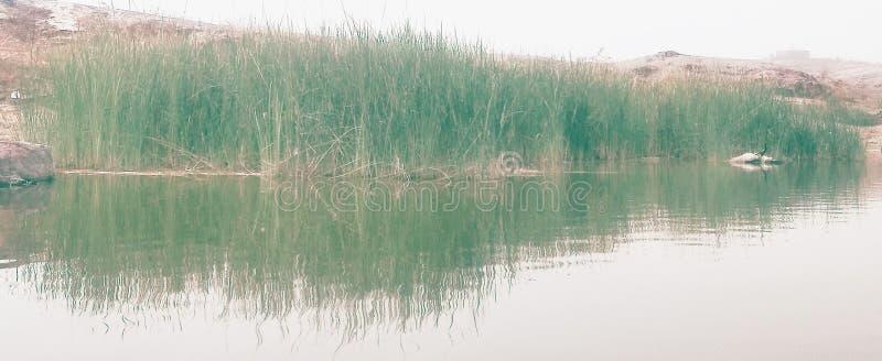 Replecetion di Greenaris in acqua fotografia stock