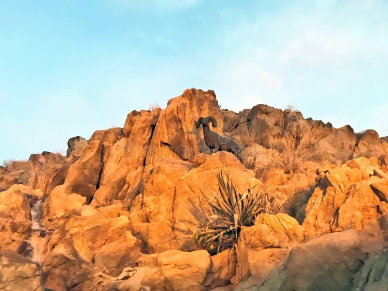 Big Horn Sheep Standing On A Rock Overlooking Desert stock photos