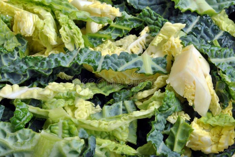 repolho de savoy orgânico fresco do jardim fotos de stock royalty free