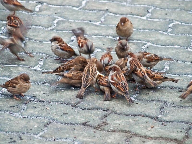 Reportagem dos pássaros fotografia de stock