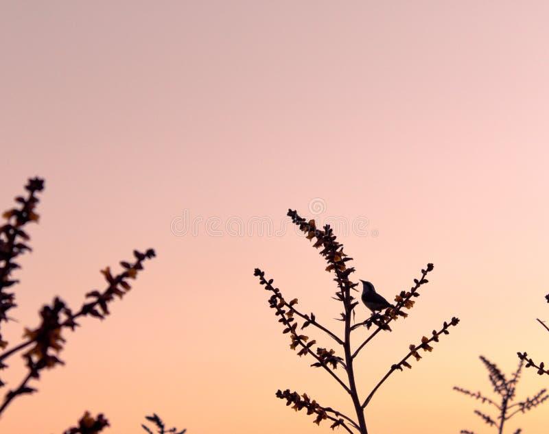 Repos d'oiseau photos stock