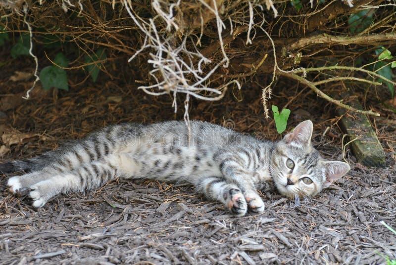 Repos de chaton photographie stock libre de droits