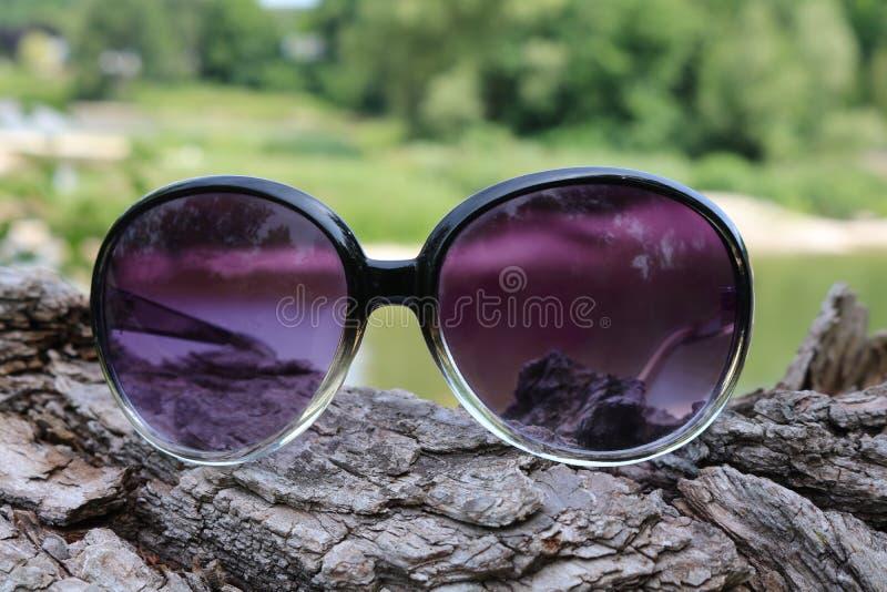 Repos de lunettes de soleil sur l'écorce du rondin photo libre de droits