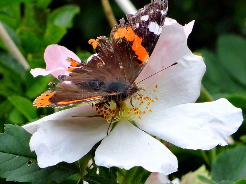 Repos de papillon sur la feuille photos libres de droits