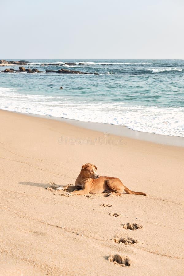 Repos drôle de chien sur le sable de plage d'océan, froid d'été image libre de droits