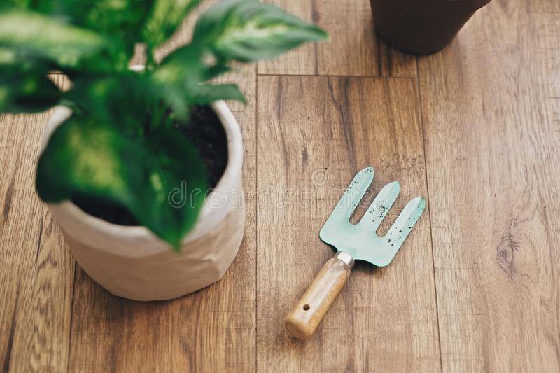 Repotting plant concept. Closeup at gardening stylish tools, and dieffenbachia plant potted with new soil into new modern pot, old. Clay pots on wooden floor stock images