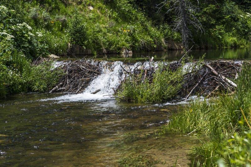 Represa do castor na angra de Huntington em Emery County Utah fotografia de stock royalty free