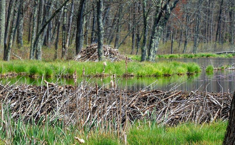 Represa, lagoa e alojamento do castor imagem de stock