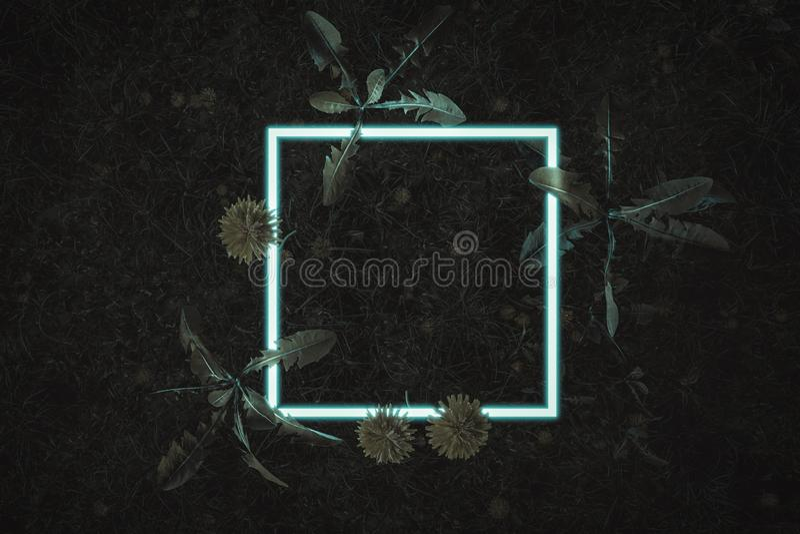 representación 3d de la luz de neón de la casilla blanca con las plantas del diente de león Endecha plana del concepto m?nimo del libre illustration