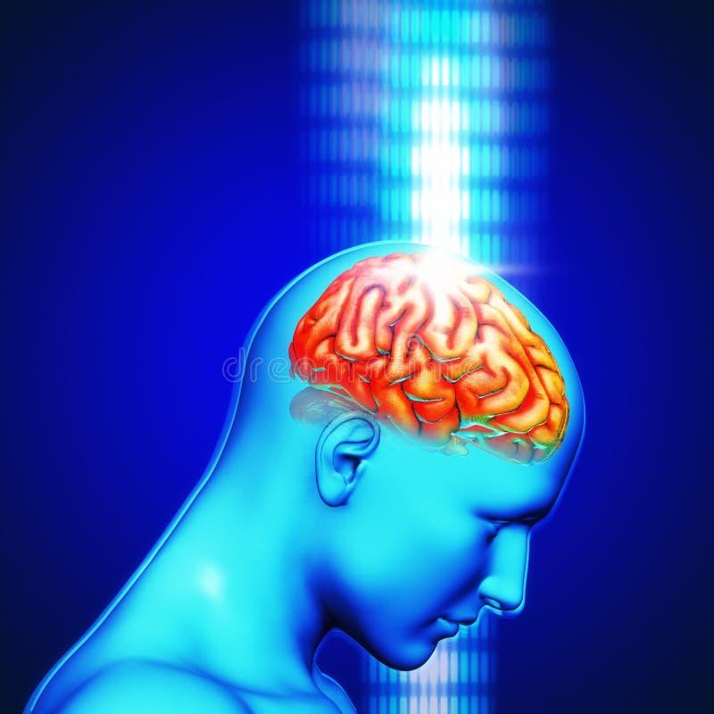 representación 3d de una cabeza humana con el cerebro destacado con la luz del rayo ilustración del vector