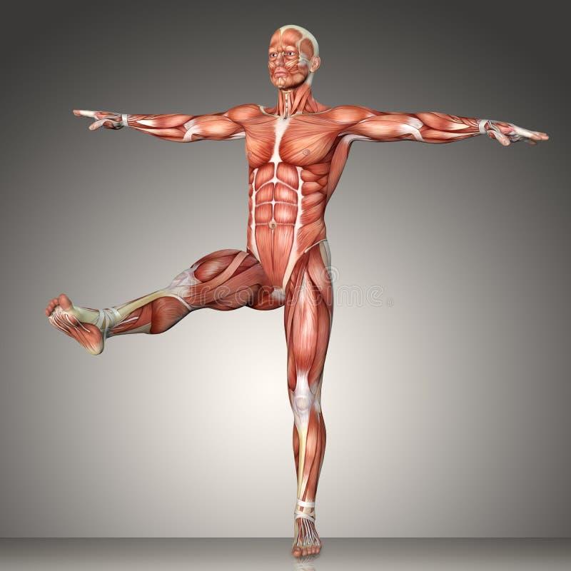 representación 3d de una figura masculina de la anatomía en actitud del ejercicio ilustración del vector