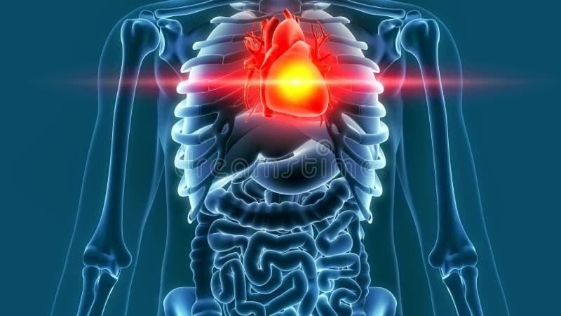 Representación humana del dolor 3d del corazón libre illustration