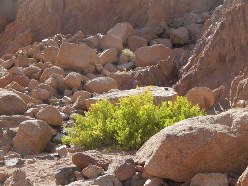 Representanten av floran i klyftan färgade kanjonen arkivfoto