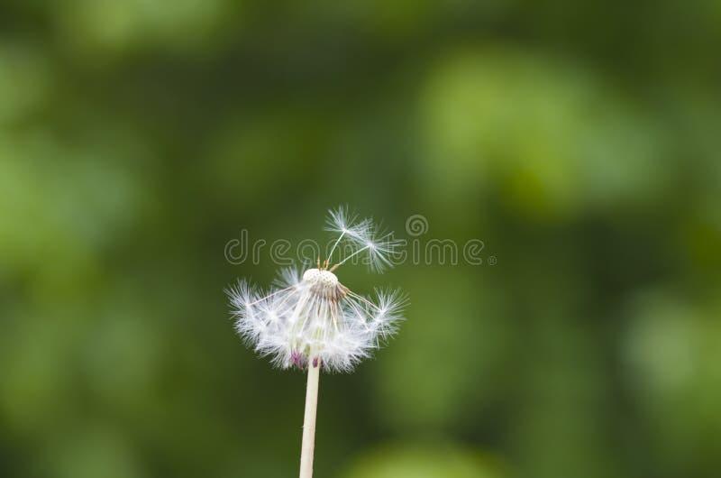Reproducción de la primavera y del verano de prados fotografía de archivo libre de regalías