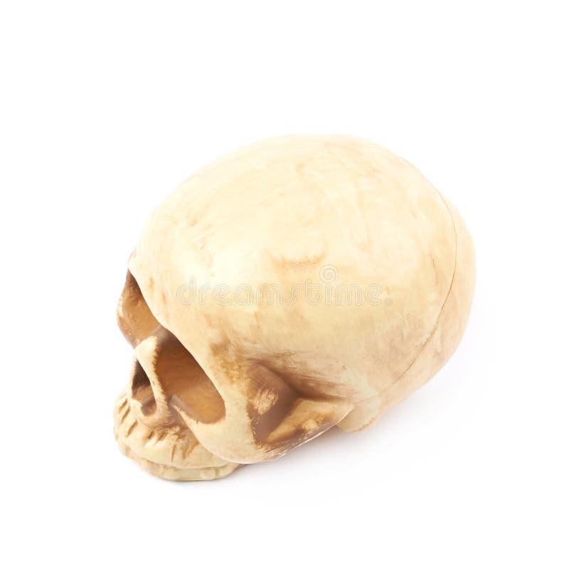 Reproducción Humana De La Resina Del Cráneo Aislada Foto de archivo ...