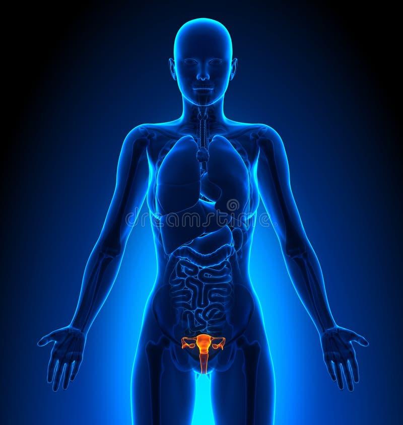 Erfreut Bilder Der Menschlichen Anatomie Organe Bilder - Anatomie ...