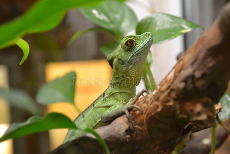 Reptiel in dierentuin stock afbeelding