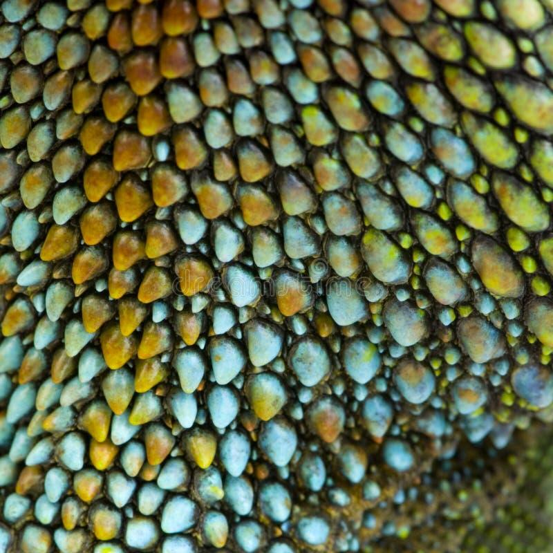 Reptiel huid royalty-vrije stock afbeelding