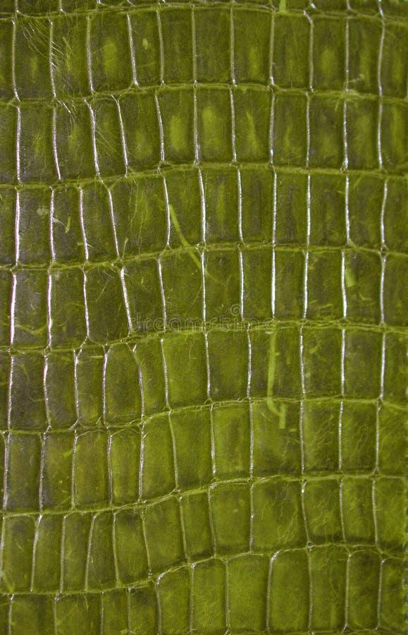Reptiel Textuur stock afbeelding