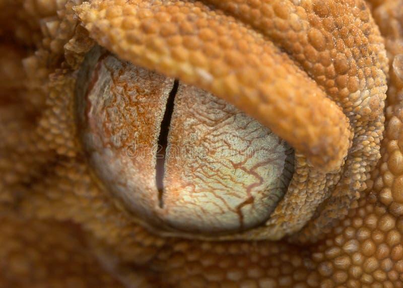 Reptilöga royaltyfri fotografi