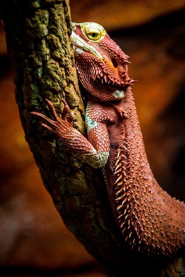 reptil royaltyfria foton