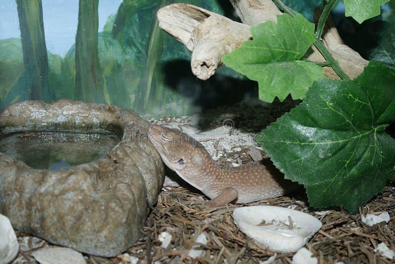 Reptil arkivfoto