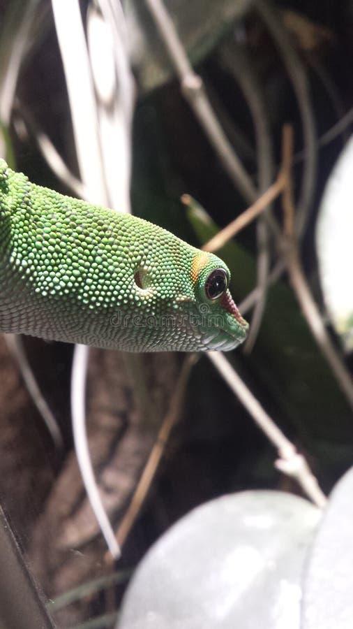 Reptil стоковое фото