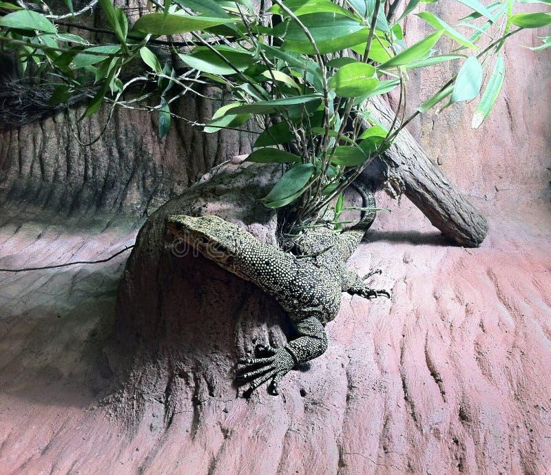 Reptil gigante en una cama de rocas imagen de archivo libre de regalías