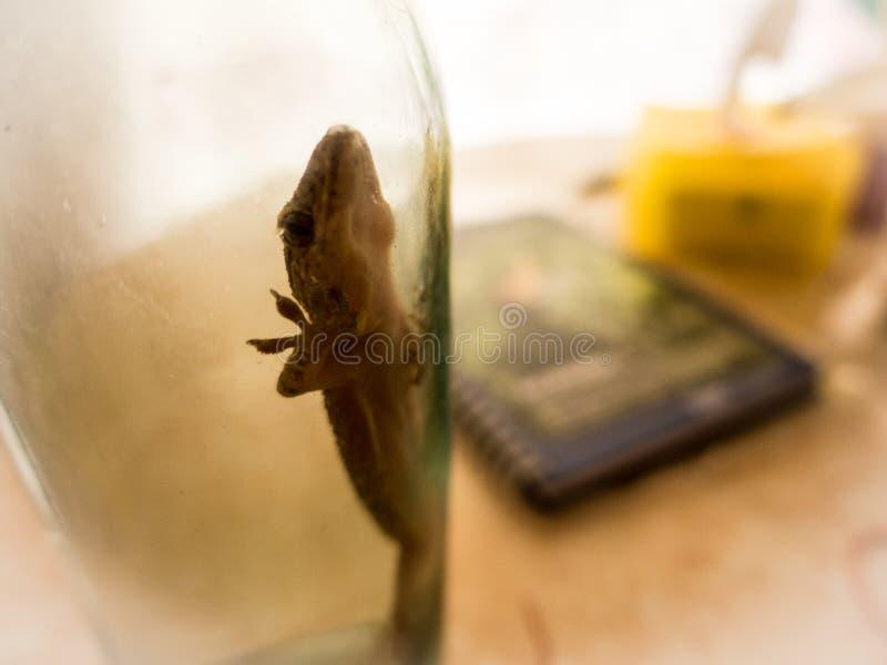Reptil i en flaska arkivfoto
