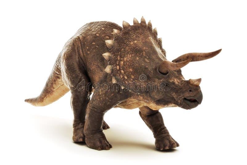 Reptil jurásico del dinosaurio del Triceratops en un fondo blanco stock de ilustración