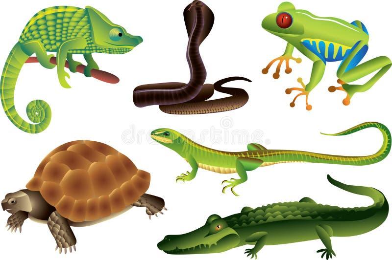 reptil- och amfibieuppsättning vektor illustrationer