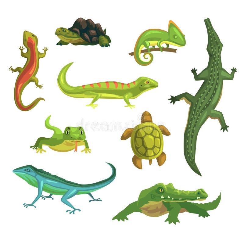 Reptil- och amfibieuppsättning av vektorillustrationer royaltyfri illustrationer